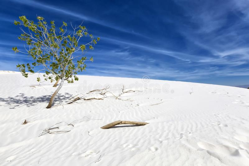 New Mexico - The white sands. A white desert of gypsium stock image