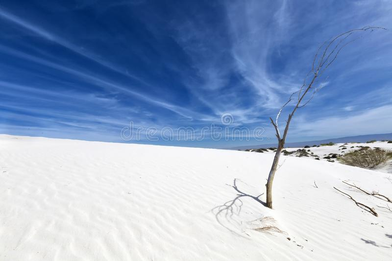 New Mexico - The white sands. A white desert of gypsium royalty free stock images