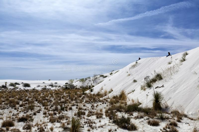 New Mexico - The white sands. A white desert of gypsium royalty free stock image