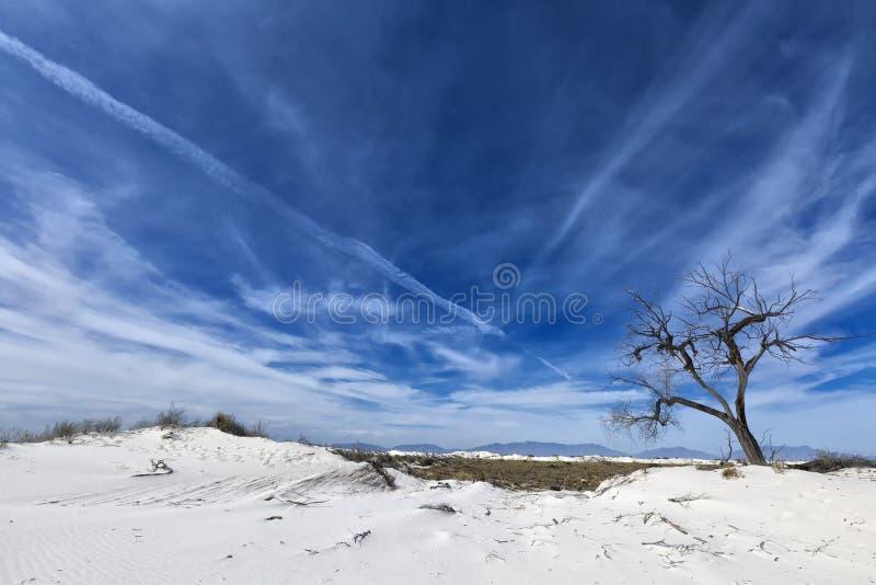 New Mexico - The white sands. A white desert of gypsium royalty free stock photos