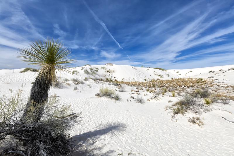 New Mexico - The white sands. A white desert of gypsium stock images