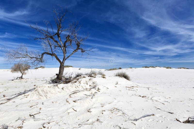 New Mexico - The white sands. A white desert of gypsium stock photos