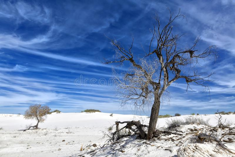 New Mexico - The white sands. A white desert of gypsium royalty free stock photo