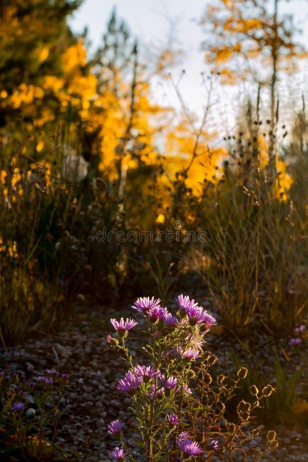 New Mexico Wildflowers bij Zonsondergang stock foto's