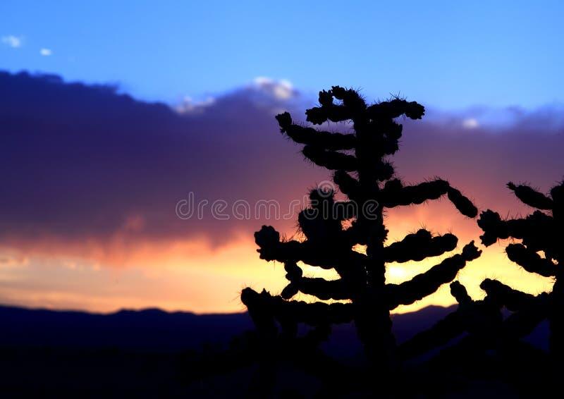 New Mexiko-Wüsten-Kaktus-Sonnenuntergang lizenzfreies stockfoto