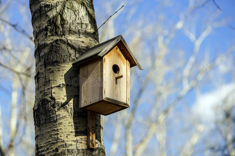 New nesting box on the tree. Spring day stock photography