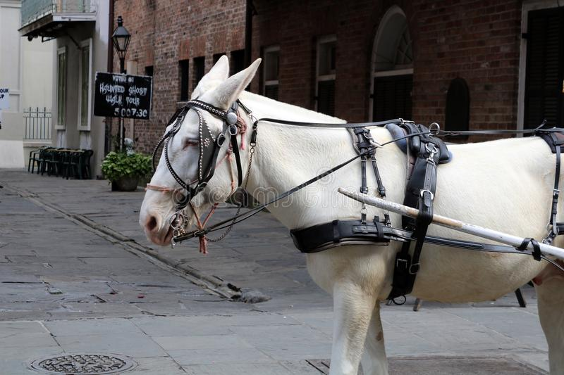 New Orleans Horse and vintage streets. Of the death city royalty free stock photos
