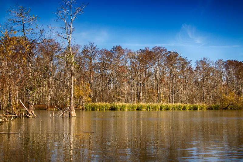 New Orleans Swamps. Louisiana, USA royalty free stock image