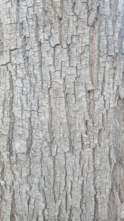 Another new Perspective of the Tree Bark. Ideal for different textures. A new photo with another perspective, perfect for textures. The bark of a tree in the stock images