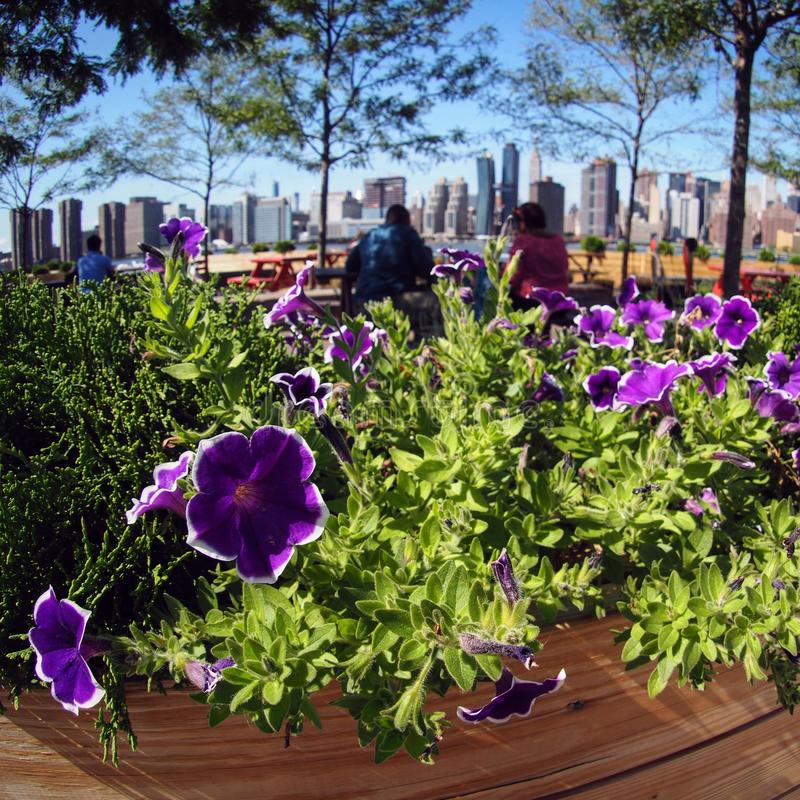 The new pier and flowers in Hunters Point South, Queens, NYC. Hunter`s Point South is a mixed-use development for middle income residents situated on stock photos