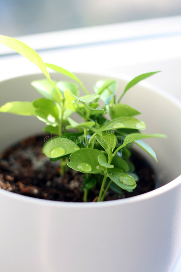 New plant royalty free stock images