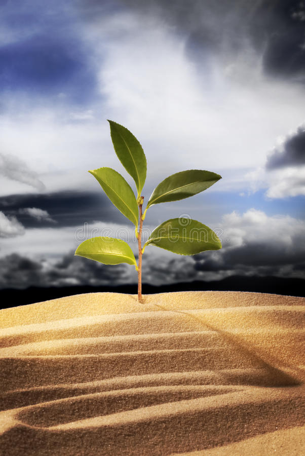 New plant growth. New plant sprouting from sand against dramatic sky stock photos