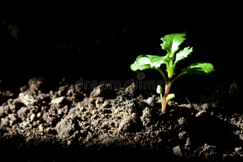 Download New plant life stock photo. Image of floral, green, morning - 13608382
