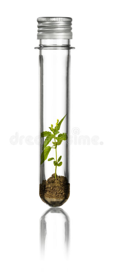 New plant in a tube royalty free stock photos