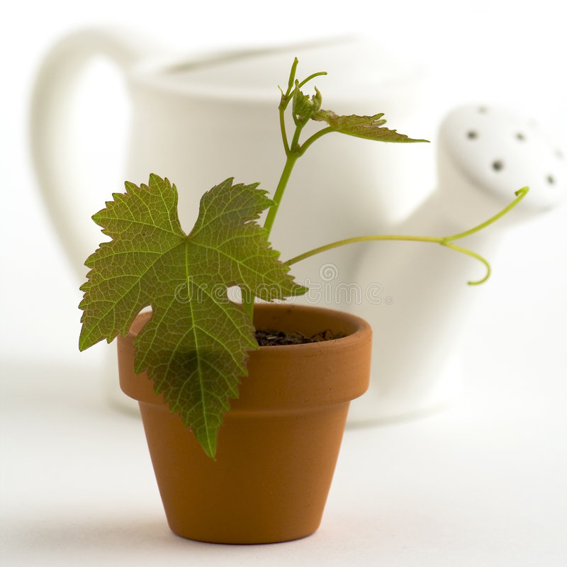 New plant and watering-can stock images