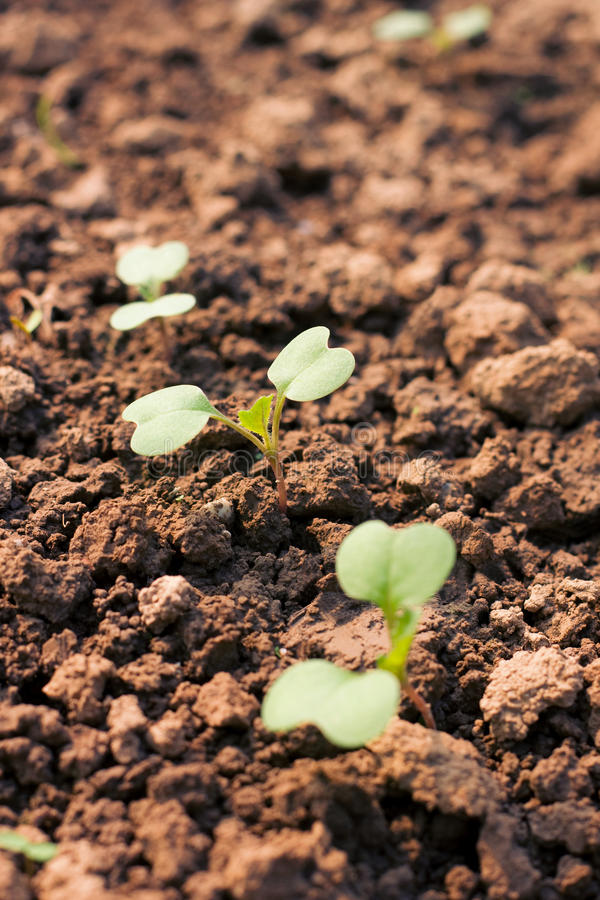 New seedling. Green seedling illustrating concept of new life royalty free stock photography