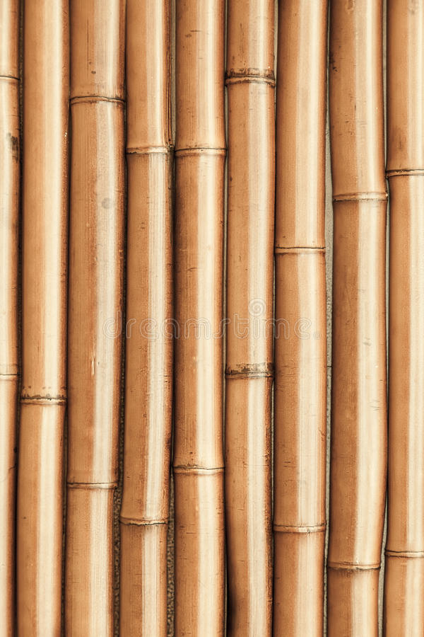 New shining bamboo wall vertical background royalty free stock images