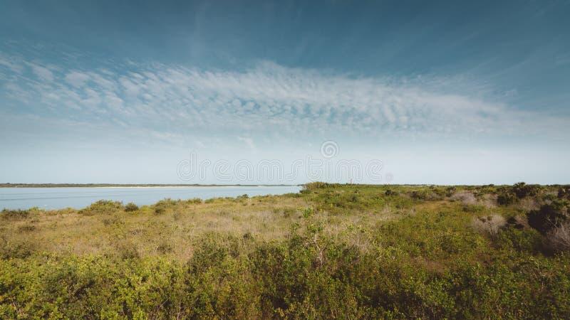 New Smyrna Dunes Scrub Land royalty free stock photography