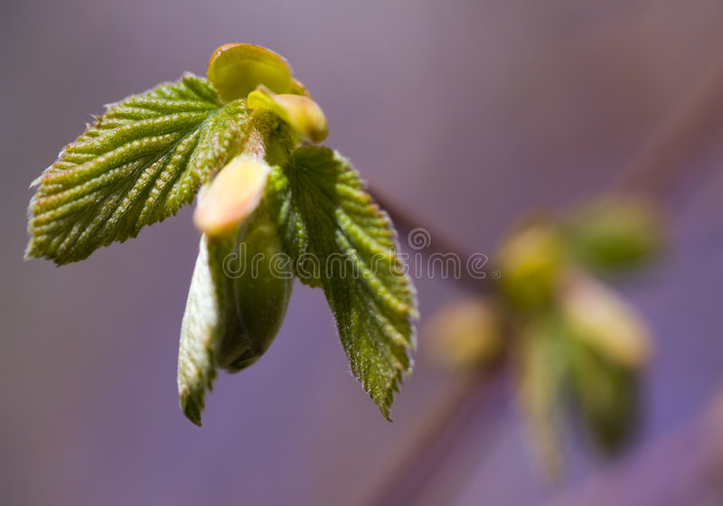 New spring growth royalty free stock photo