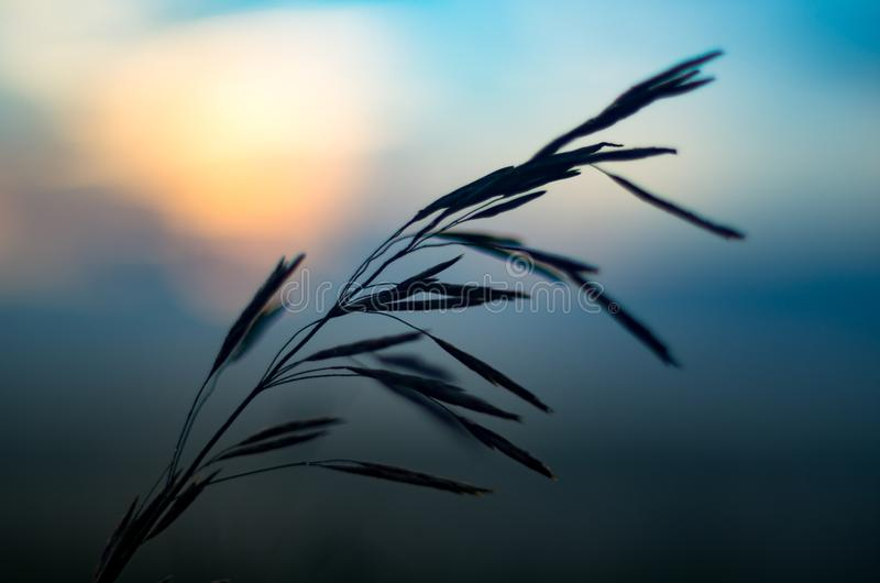 New start concept: vibrant summer sunrise through the tall grass with yellow, red highlights, blurred blue clouds and morning fog. In background royalty free stock images