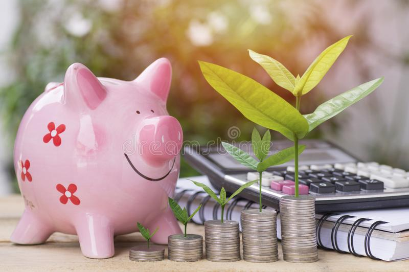 New tree growing up and stacked of money coins with pink piggy bank and calculator on table, concept as success and save. In business stock image
