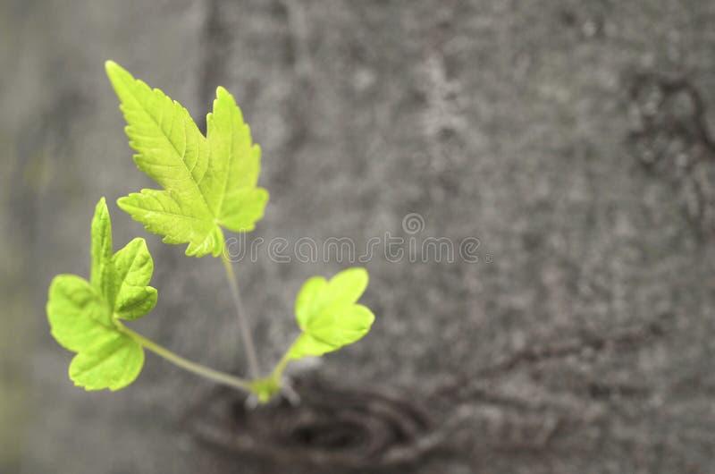 New tree shoots stock photography
