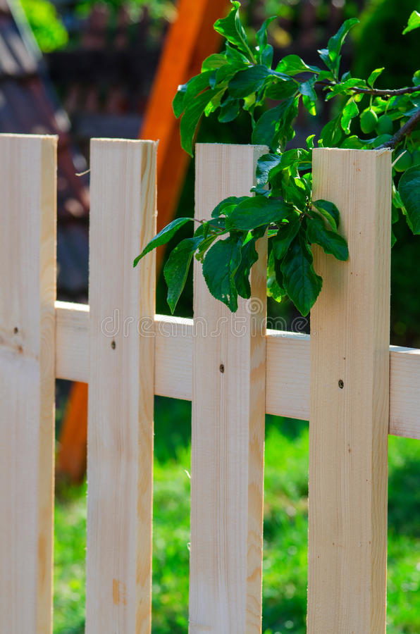 New uncolored wooden fence in a garden under a tree stock photography