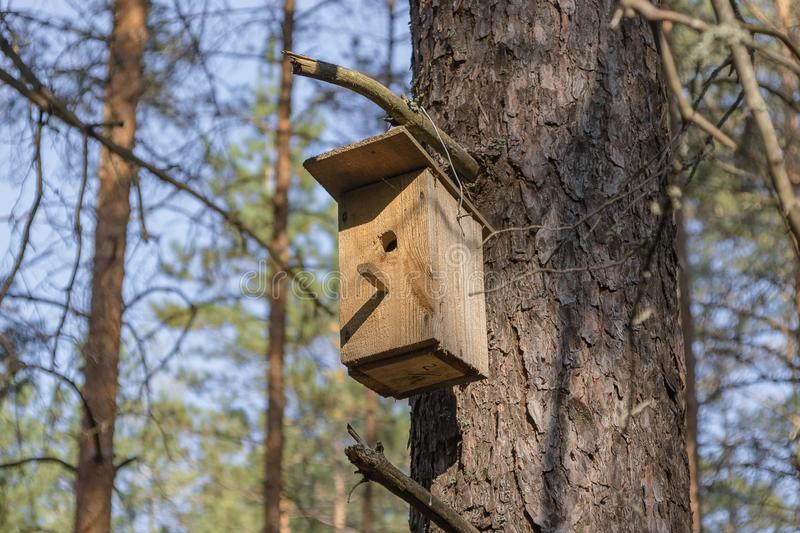 New wooden birdhouse on a tree for forest birds in the forest. New wooden birdhouse on a pine, a house in the forest, suitable for forest birds, trees in good stock images