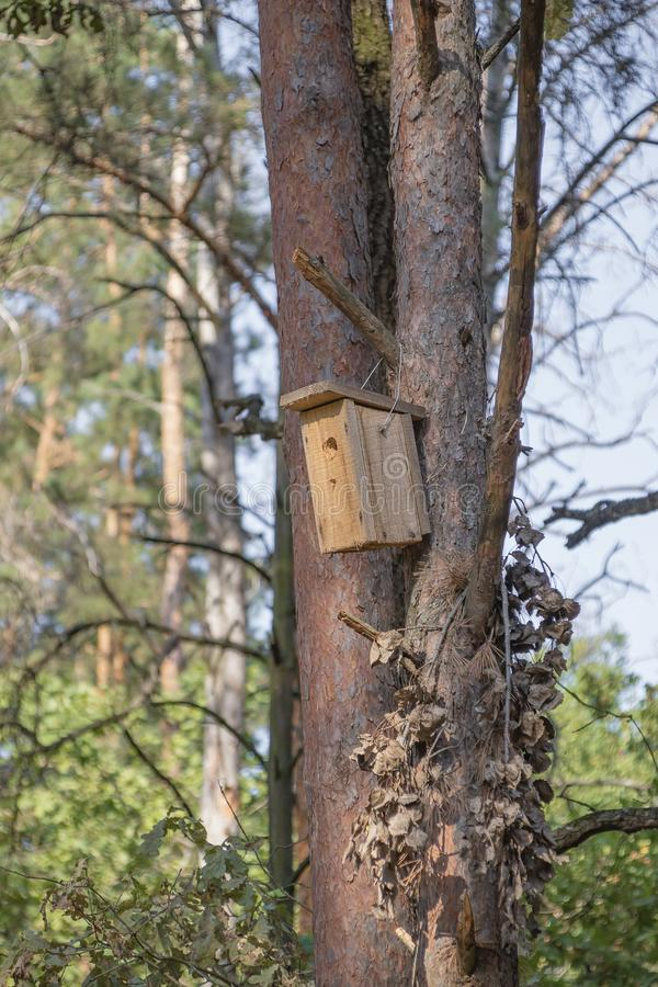 New wooden birdhouse on a tree for forest birds in the forest. New wooden birdhouse on a pine, a house in the forest, suitable for forest birds, trees in good stock photos