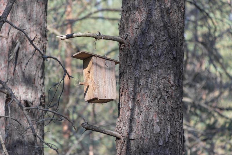 New wooden birdhouse on a tree for forest birds in the forest. New wooden birdhouse on a pine, a house in the forest, suitable for forest birds, trees in good royalty free stock images