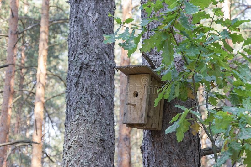 New wooden birdhouse on a tree for forest birds in the forest. New wooden birdhouse on a pine, a house in the forest, suitable for forest birds, trees in good royalty free stock photo