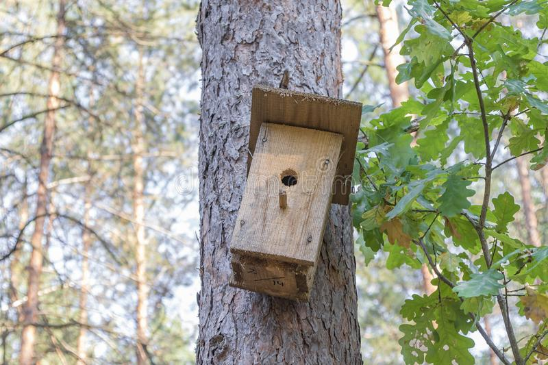 New wooden birdhouse on a tree for forest birds in the forest. New wooden birdhouse on a pine, a house in the forest, suitable for forest birds, trees in good stock photo