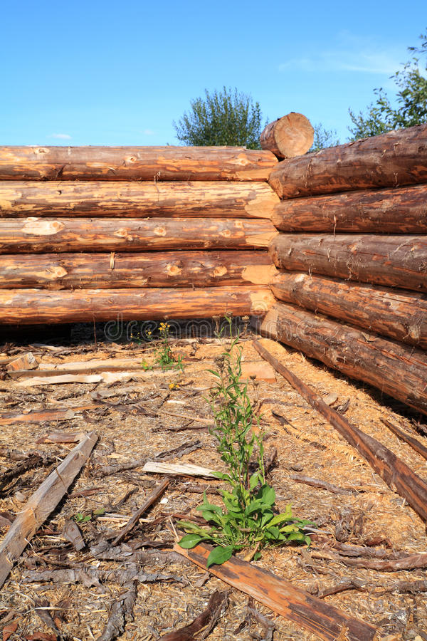 Download New wooden house stock photo. Image of blue, outdoors - 24383364