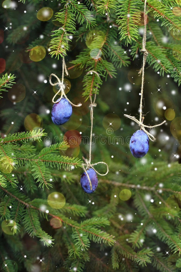 New Year card. Plum hanging on a Christmas tree. stock photos