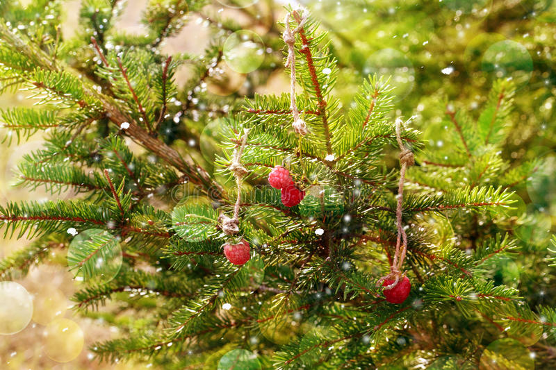 New Year card. Raspberry hanging on a Christmas tree. royalty free stock image