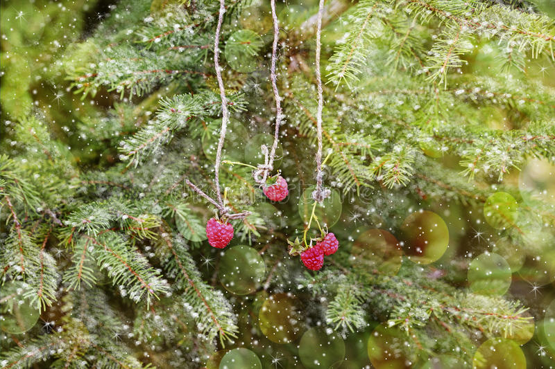 New Year card. Raspberry hanging on a Christmas tree. stock photos