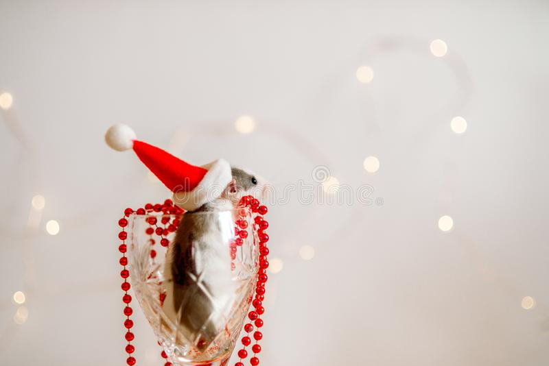 New Year card. Symbol of New Year 2020 - metal, silver rat. Cute rat with Christmas decorated tree and silver pineapple. Red Santa stock photo