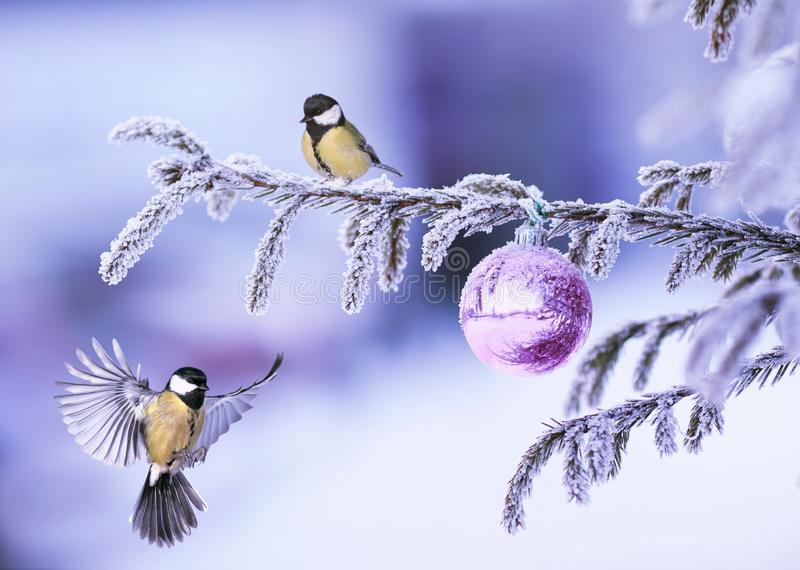 New Year card with two beautiful tit birds flying on a Christmas. Tree with a brilliant ball in a winter park stock image