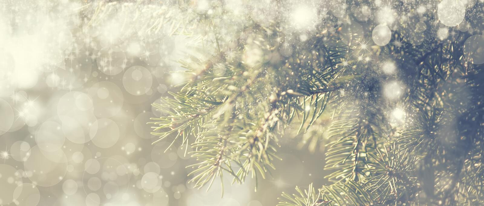 New Year or Christmas background with Christmas tree and colorful bokeh lights, banner, selective focus royalty free stock photography
