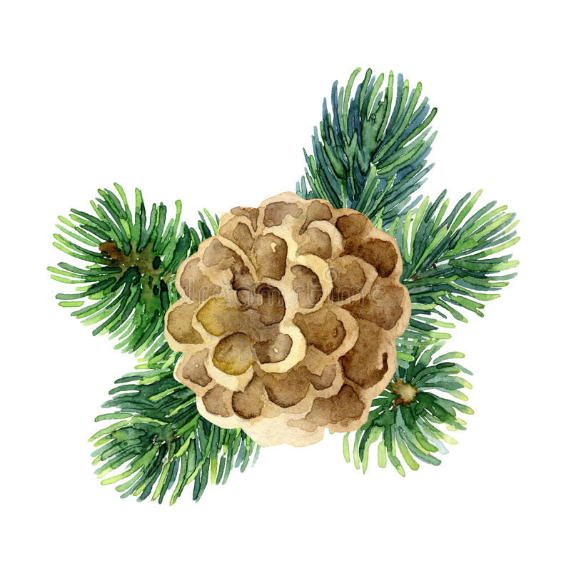 New Year composition of fir branches and cone vector illustration