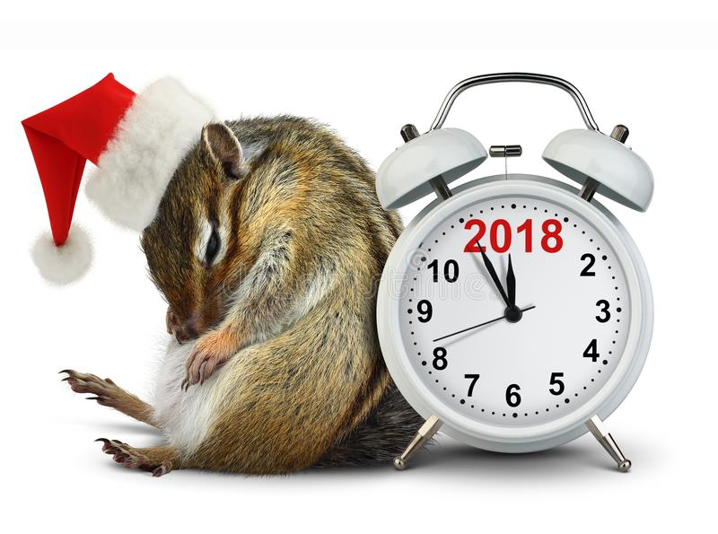 2018 New year concept, funny Chipmunk in red Santa hat with clock royalty free stock photo