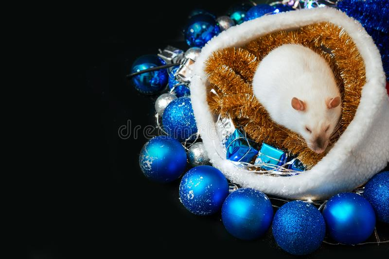 New Year concept. Top view of Cute white rat in a decor. Symbol of the year 2020. Christmas decoration and santa hat, garland. stock photography