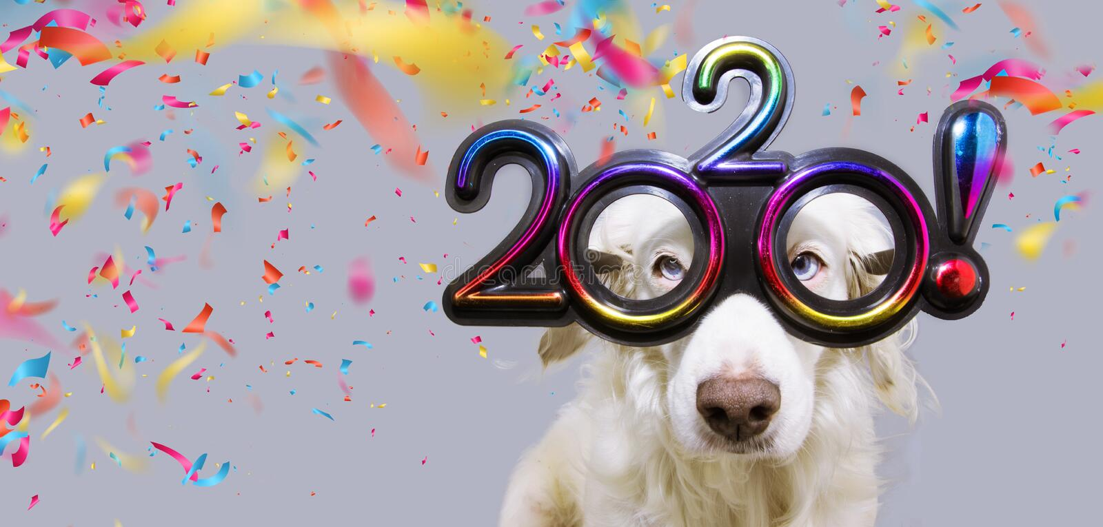 New year dog pet  that looks like goat wearing colorful 2020 text glasses.  on white background with confetti falling royalty free stock image