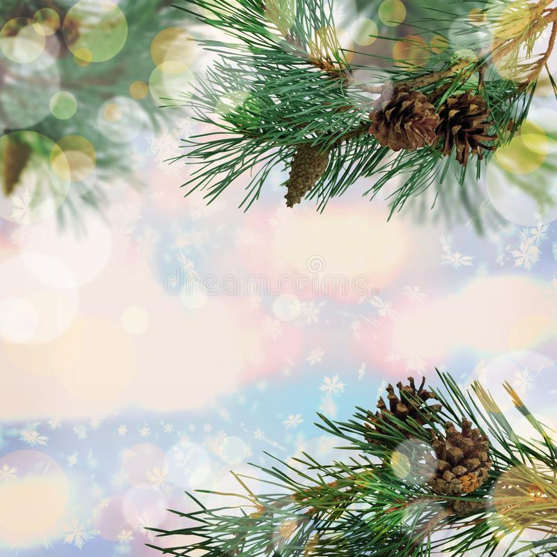 New Year. Forest winter holiday background. Pine with cones in t royalty free stock photos