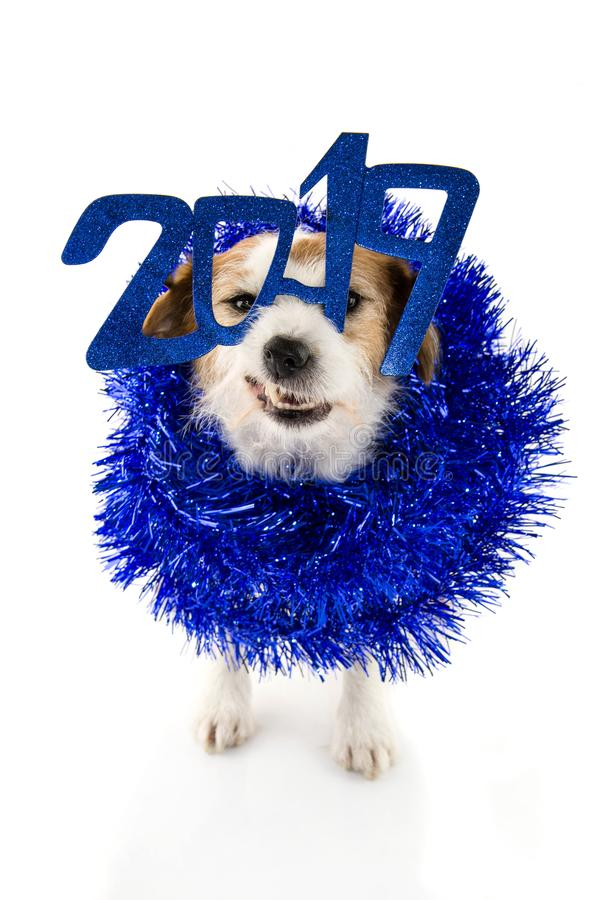 NEW YEAR 2019. FUNNY JACK RUSSELL DOG WEARING A BLUE GLASSES SIGN COSTUME AND A TINSEL GARLAND. LOOKING AT CAMERA. ISOLATED SHOT stock image