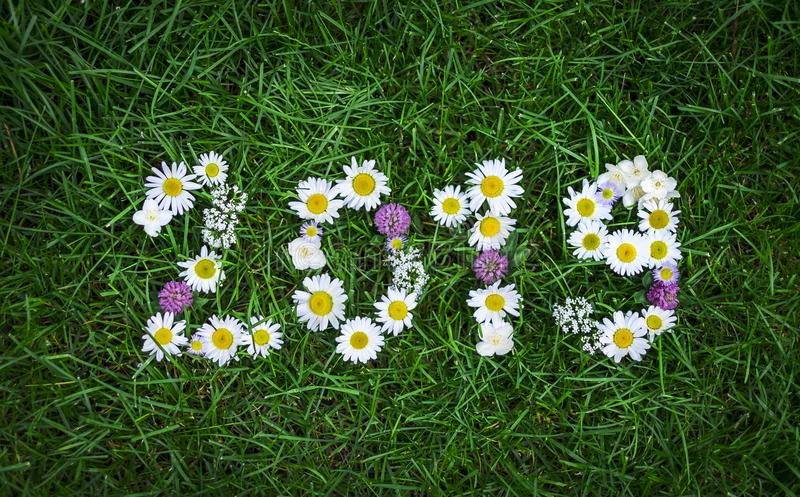 New year 2019 made of garden flowers on the grass stock photo