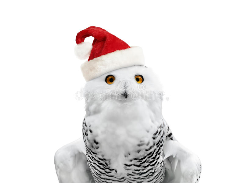 Download New year owl stock image. Image of animal, wings, holiday - 21220477