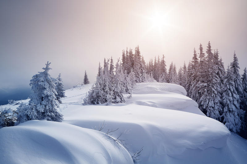 New Year`s landscape. Winter forest covered with snow. New Year`s landscape. Fabulous trees in snowdrifts. Sunlight through the mist stock photos