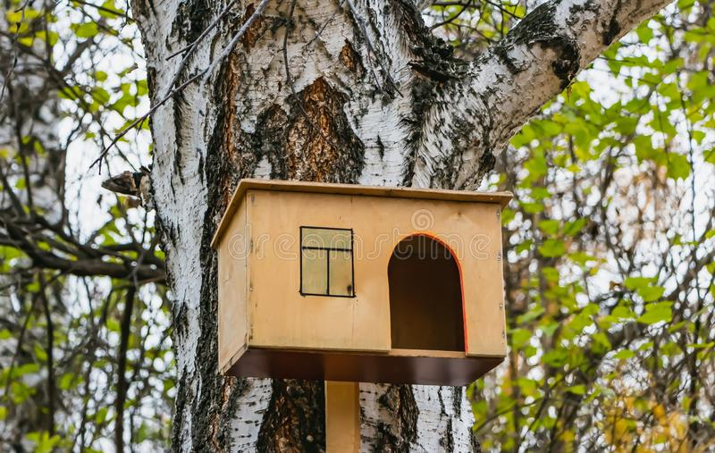 A new yellow bird and squirrel feeder house from plywood is hanging on a white old birch tree. In a park in autumn stock photo