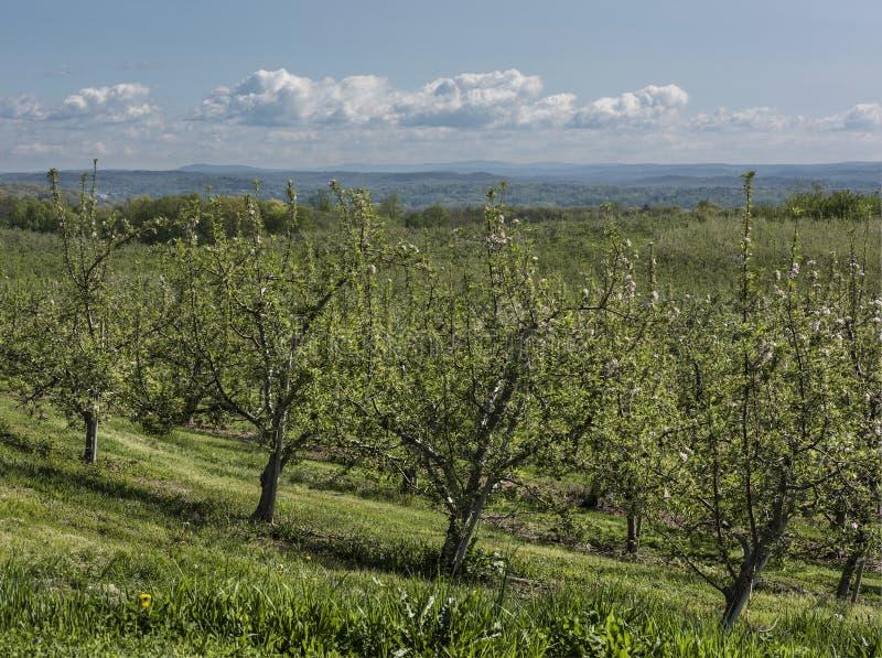 New York Apple Orchard stock image